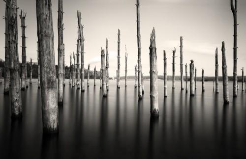 Sunken Forest_MG_8133