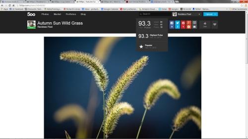 Autumn Grass 500 Pixels