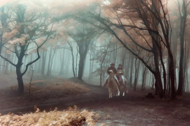 Autumn Horsemen